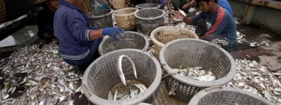 Men sort fish into baskets